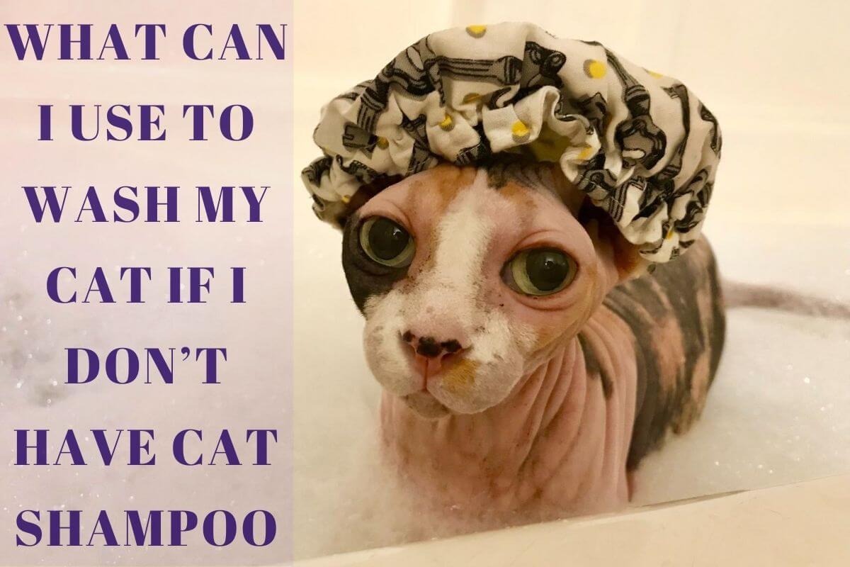 Cat Shampoo Alternatives