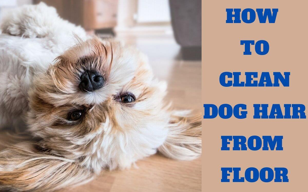 HOW TO CLEAN DOG HAIR FROM FLOORS