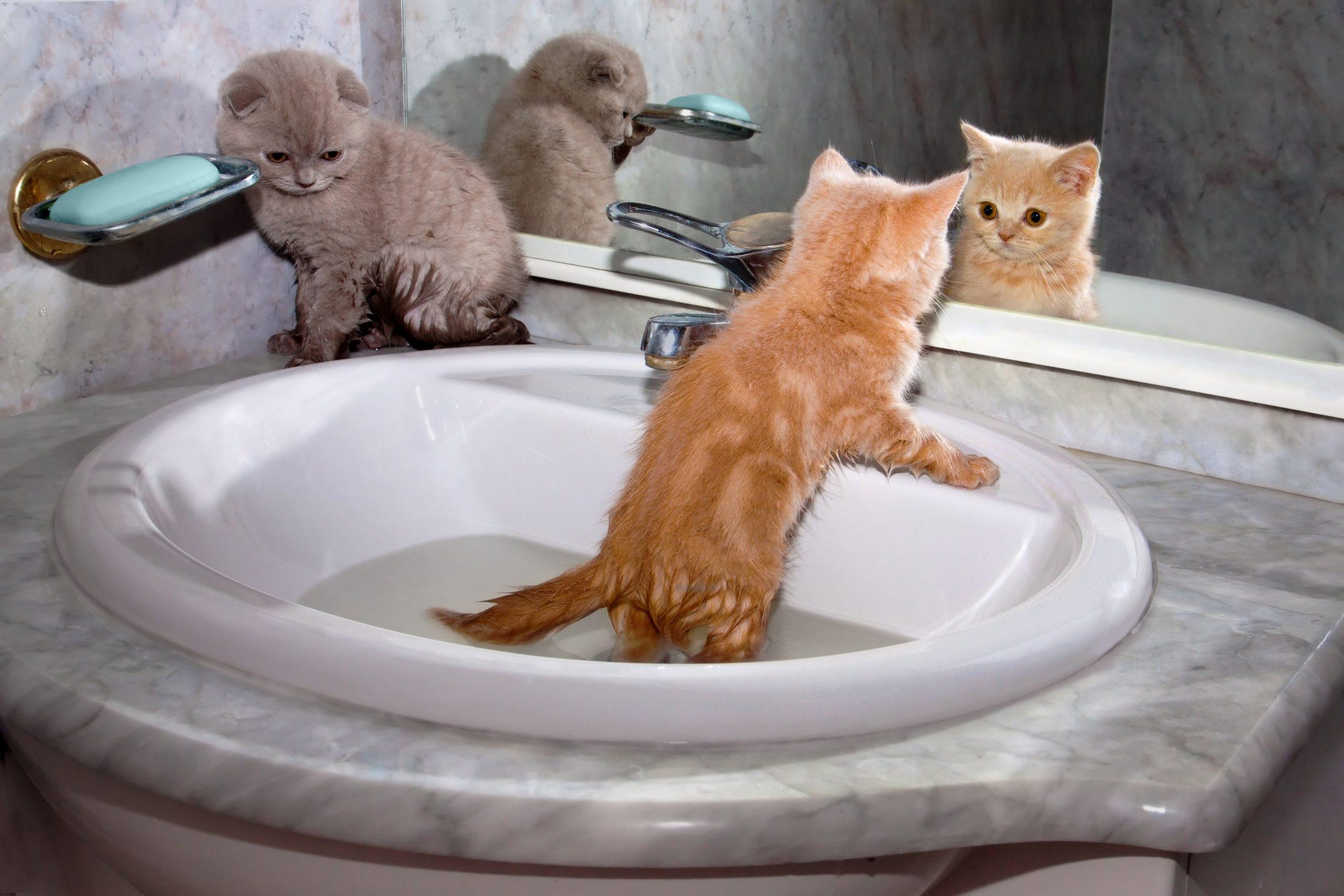 how often should you bathe a cat (2)